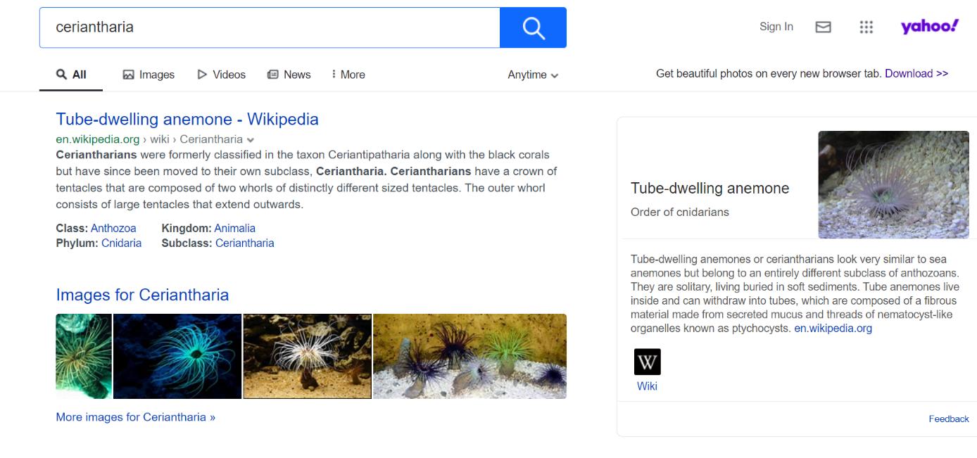 Buscadores de Internet: alternativas a Google - 1&1